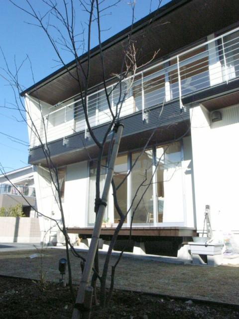 tzt house